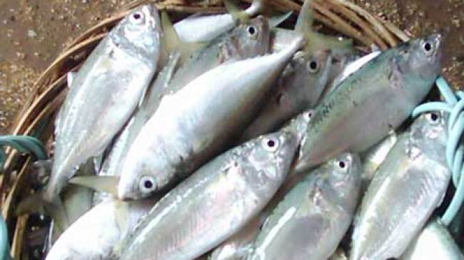 Ikan Kembung Kaya Akan Lemak Omega-3