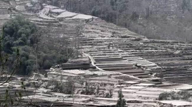 Batu, Lahan pertanian Rusak Akibat Letusan Gunung Kelud