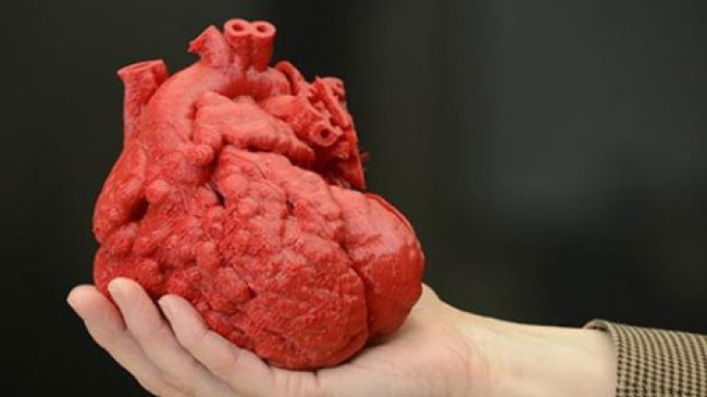 Inilah Cara Tepat Untuk Jaga Kesehatan Jantung Anda