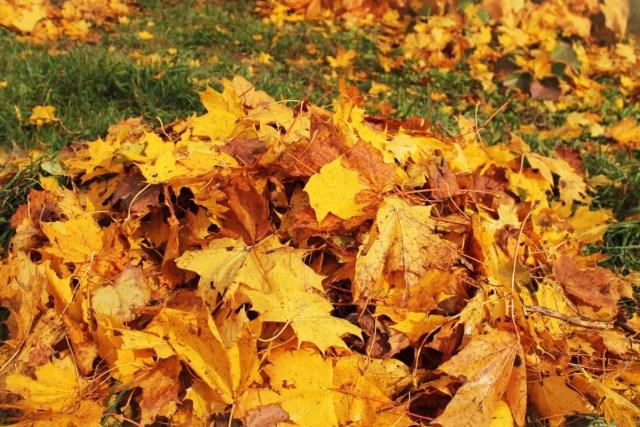 Arka bahçede toplanan yapraklar.