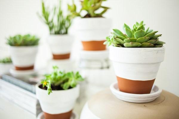 Best Pots for Succulent Plants