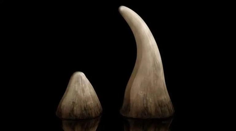 قرن وحيد القرن