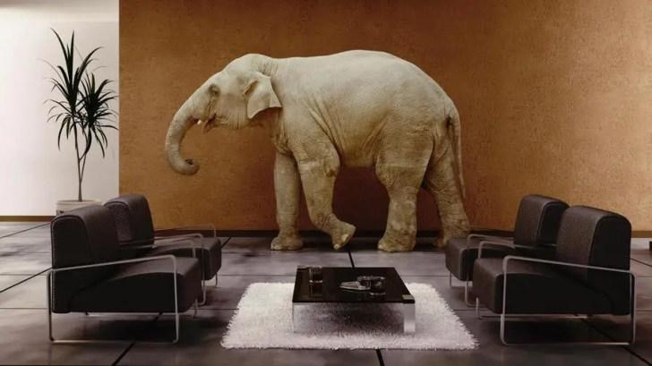 فيل في غرفة معيسة