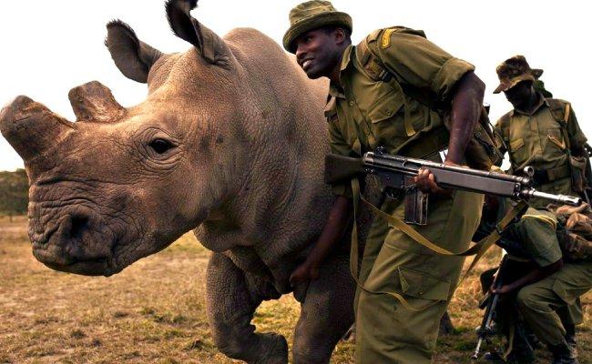 Adiós Al último Rinoceronte Blanco Macho La Bioguía Video