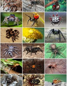 Types of spiders also all about life cycle etc rh domyown