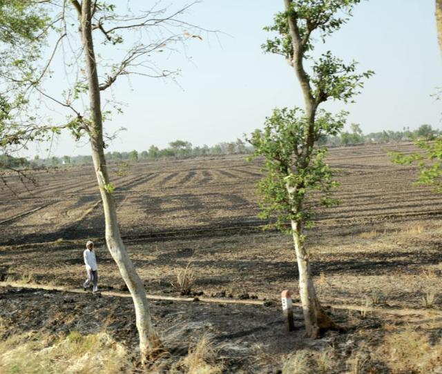 A Tract Of Burnt Land In Deoria District Of Uttar Pradesh Though Burning Crop Residue