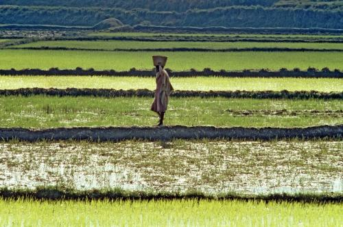 One of the main features of climate-smart agriculture is that it considers adaptation and mitigation together in the context of building agricultural systems for food security Credit: Africa Renewal/Flickr