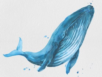 Free Blue Whale Clipart designs themes templates and downloadable graphic elements on Dribbble