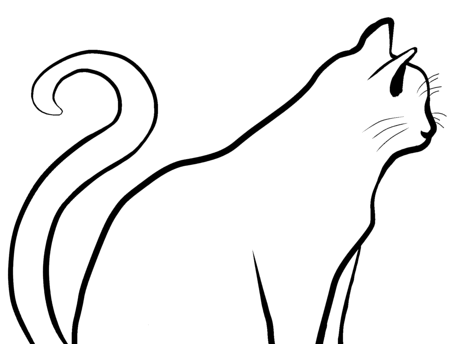 Cat Outline By Kaitlyn Dunsmoor On Dribbble