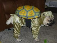 Dogs In Ridiculous Halloween Costumes. How Shameful ...