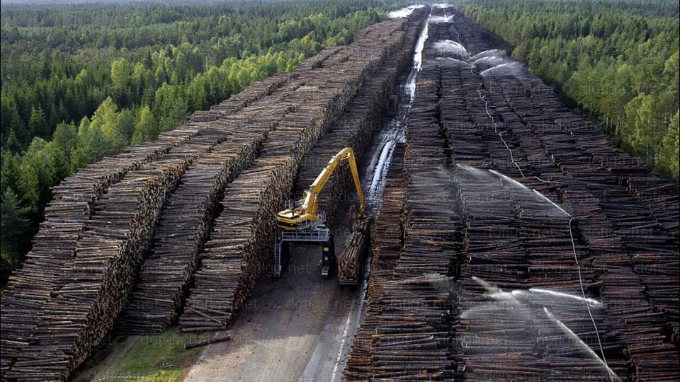 biggest pile of logs