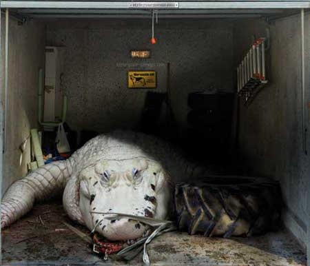 Awesome Garage Door Covers  Gallery  eBaums World