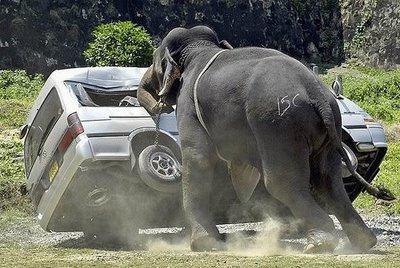 odd car crashes gallery