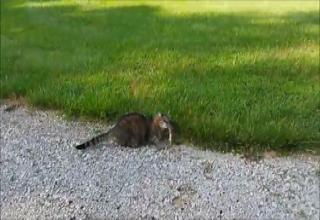 Cat Attacked By Squirrel - Video | eBaum's World