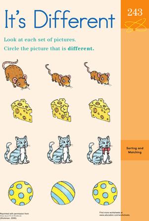 Mouse Anatomy Diagram  Worksheet  Educationcom