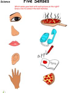 Science worksheet sort out the five senses also kindergarten worksheets  free printables education rh