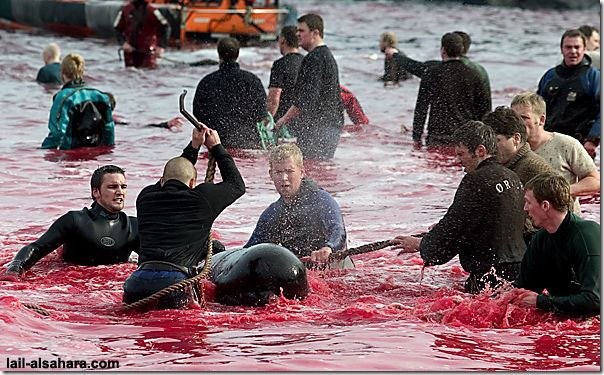 Picture 10: The sea is stained in red and in the mean while it's not because of the climate effects of nature.