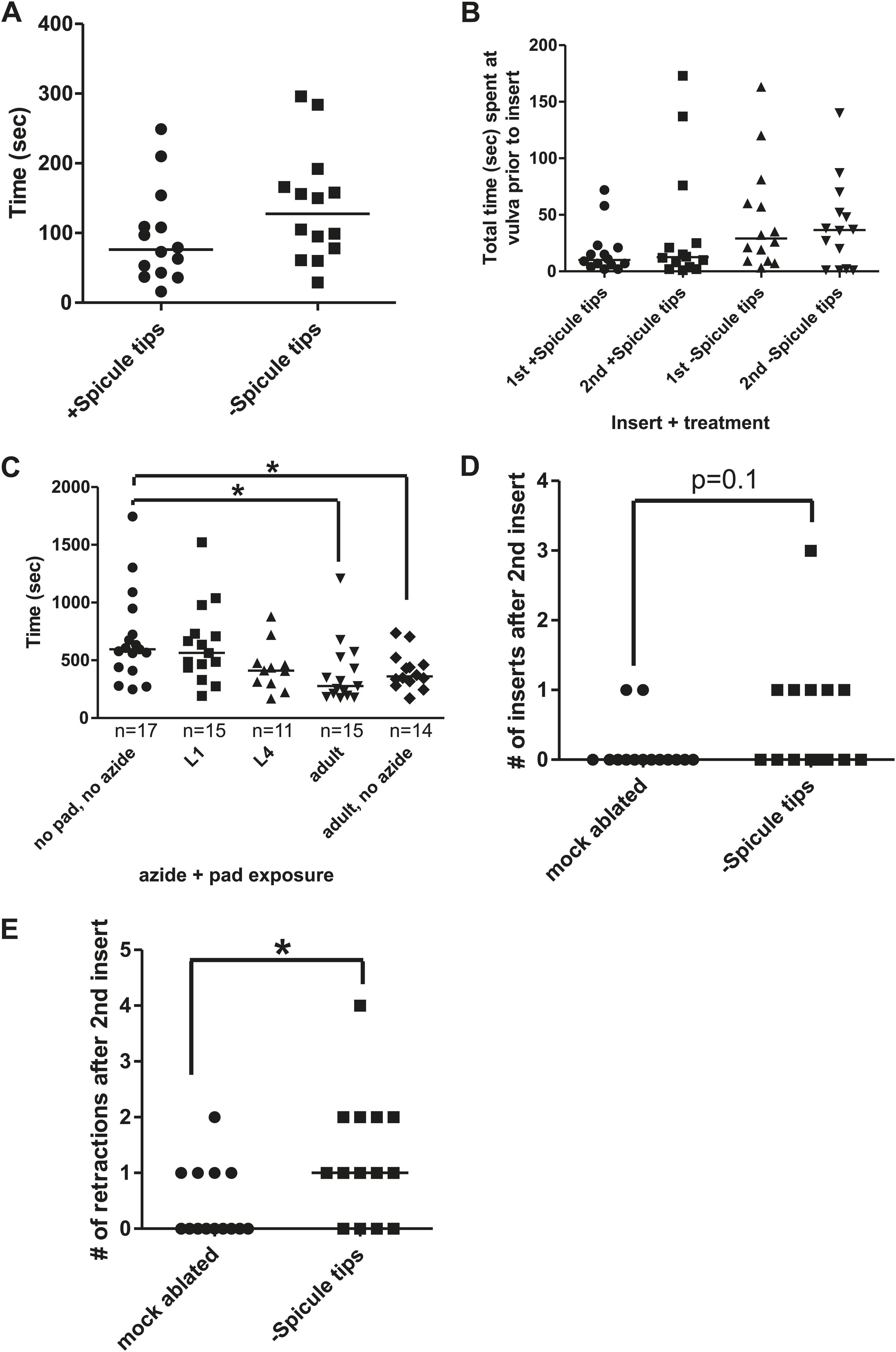 Caenorhabditis elegans male sensory-motor neurons and