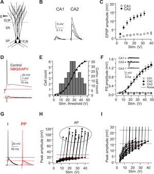 Dendritic Na+ spikes enable cortical input to drive action