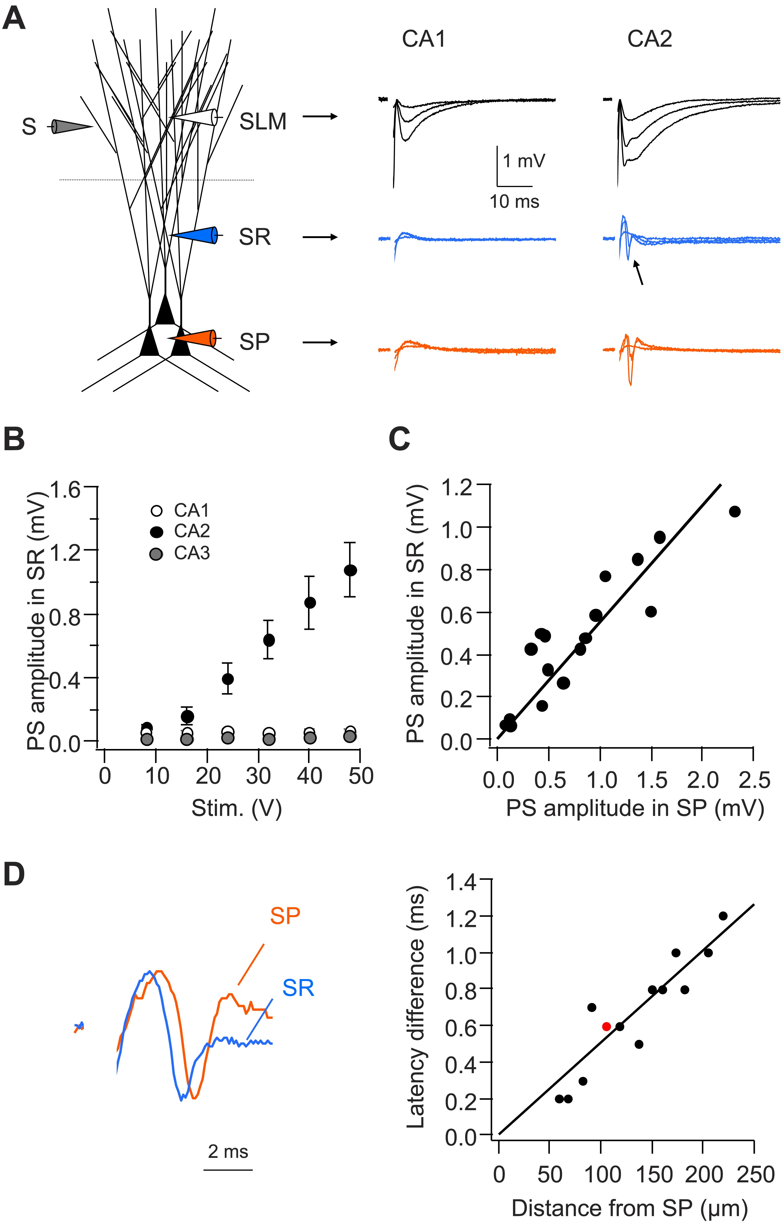 Dendritic Na Spikes Enable Cortical Input To Drive Action