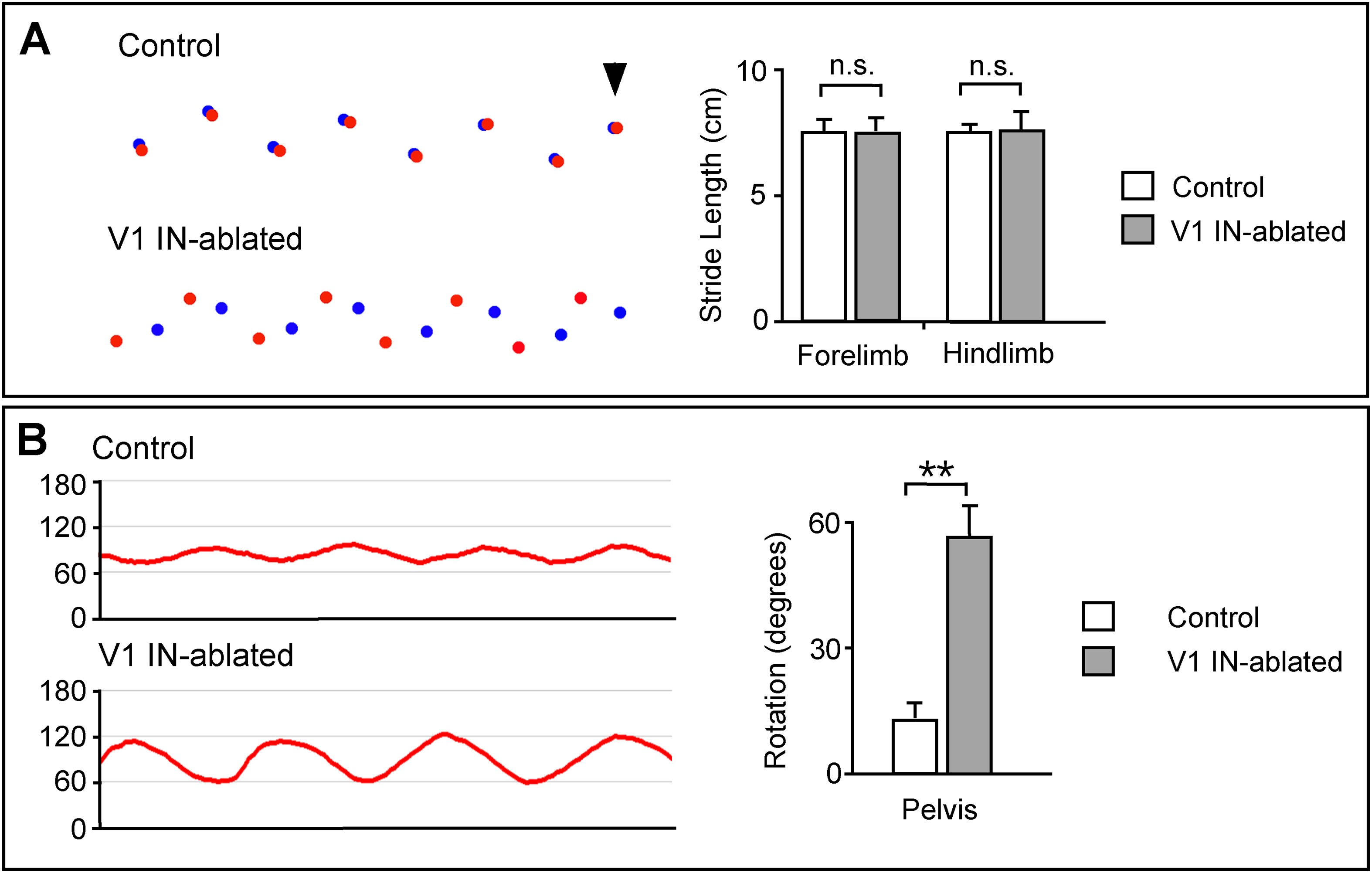 A genetically defined asymmetry underlies the inhibitory