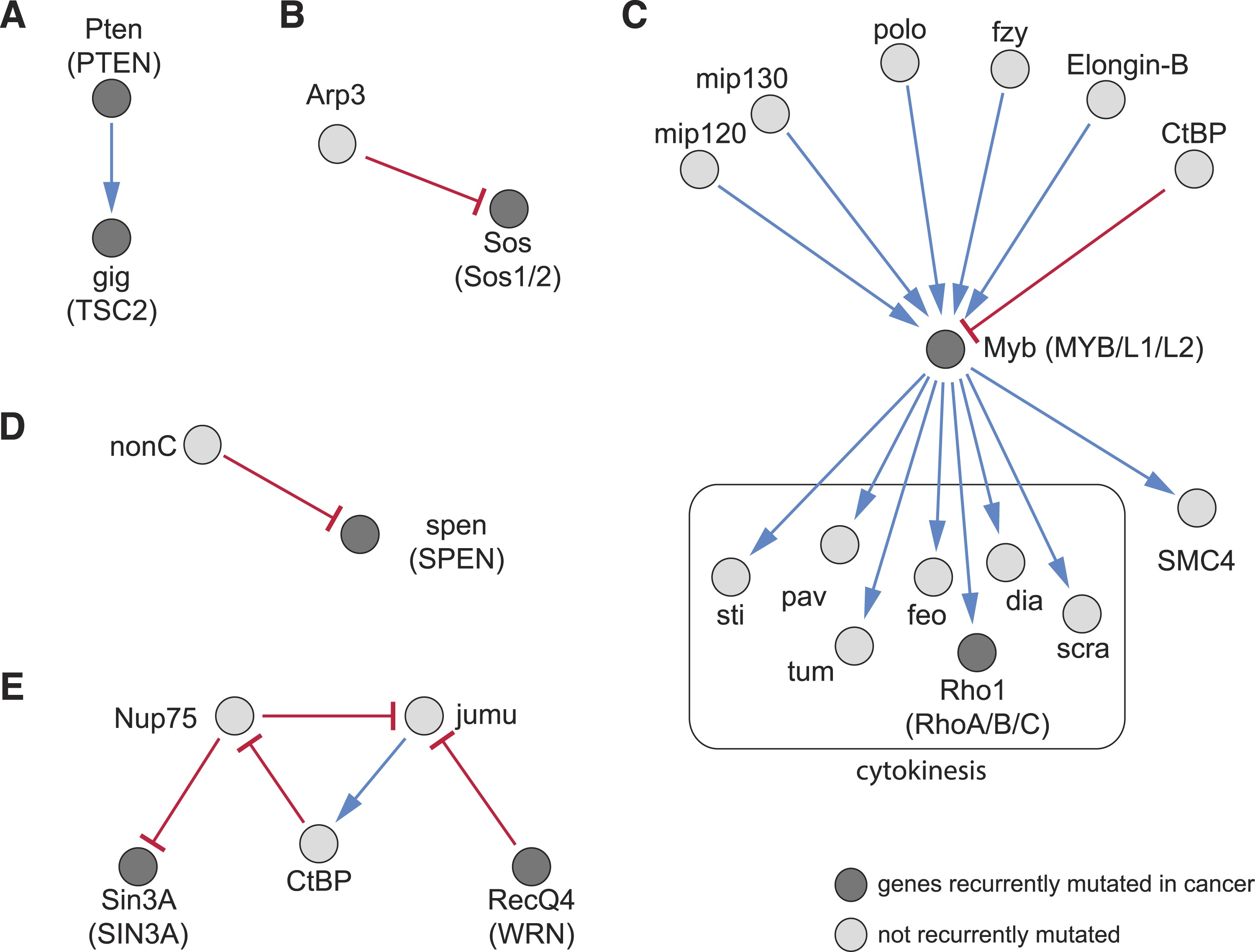 A Map Of Directional Genetic Interactions In A Metazoan