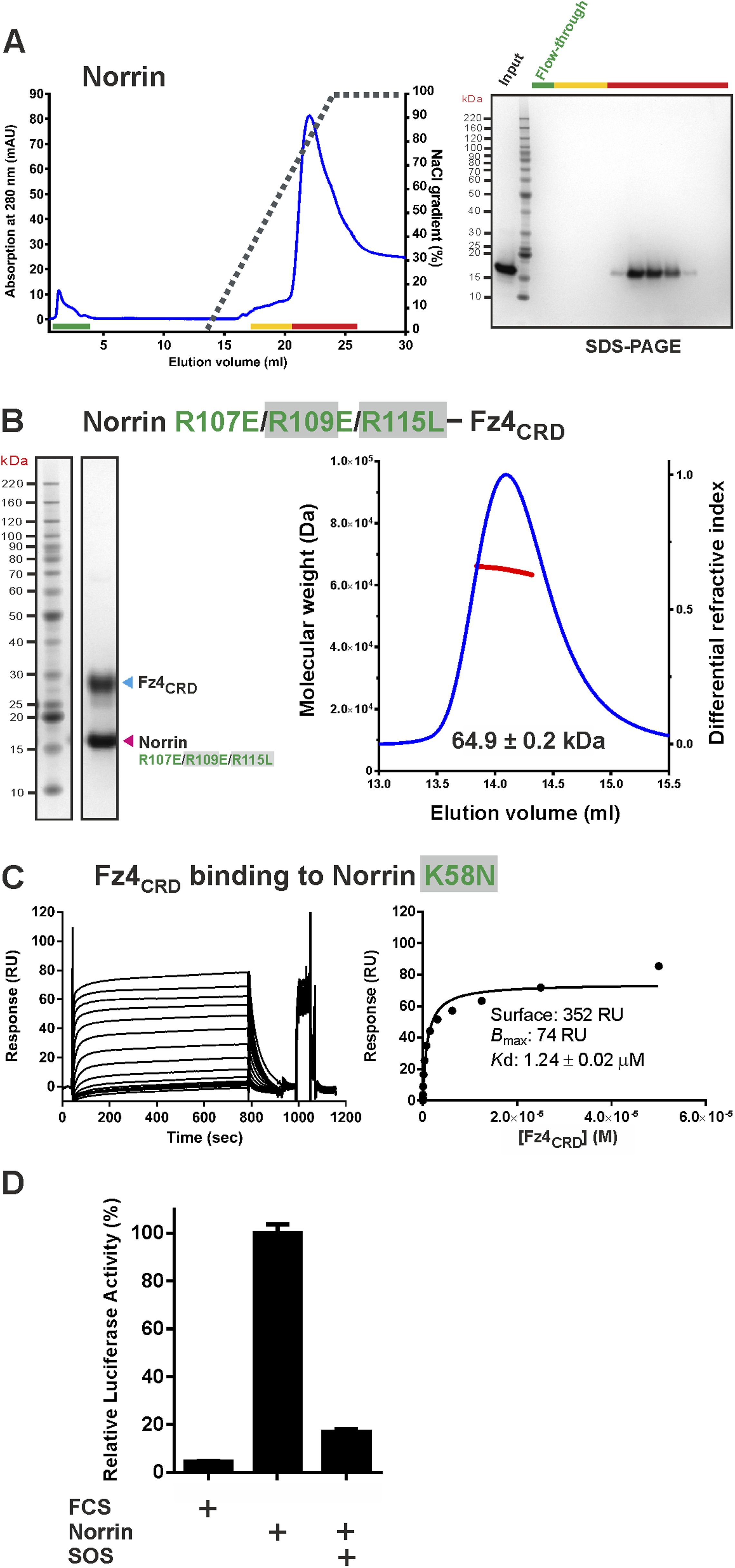 Structure And Functional Properties Of Norrin Mimic Wnt