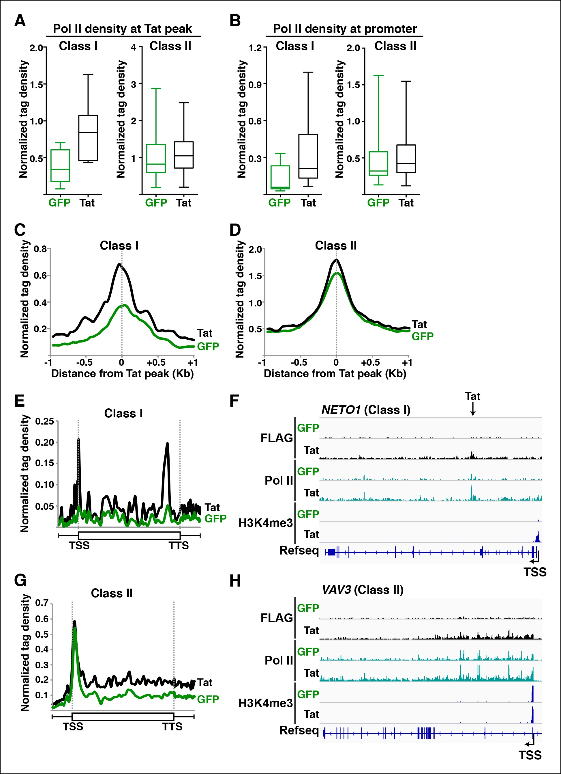 hight resolution of tat promotes pol ii recruitment and pause release at two distinct tsg classes