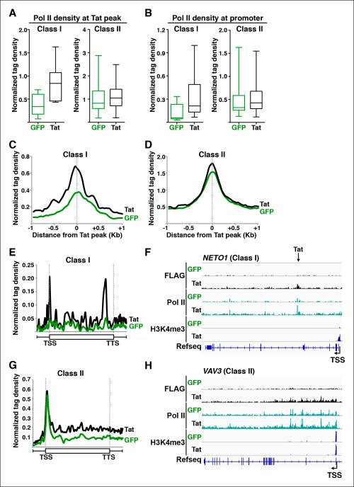 small resolution of tat promotes pol ii recruitment and pause release at two distinct tsg classes