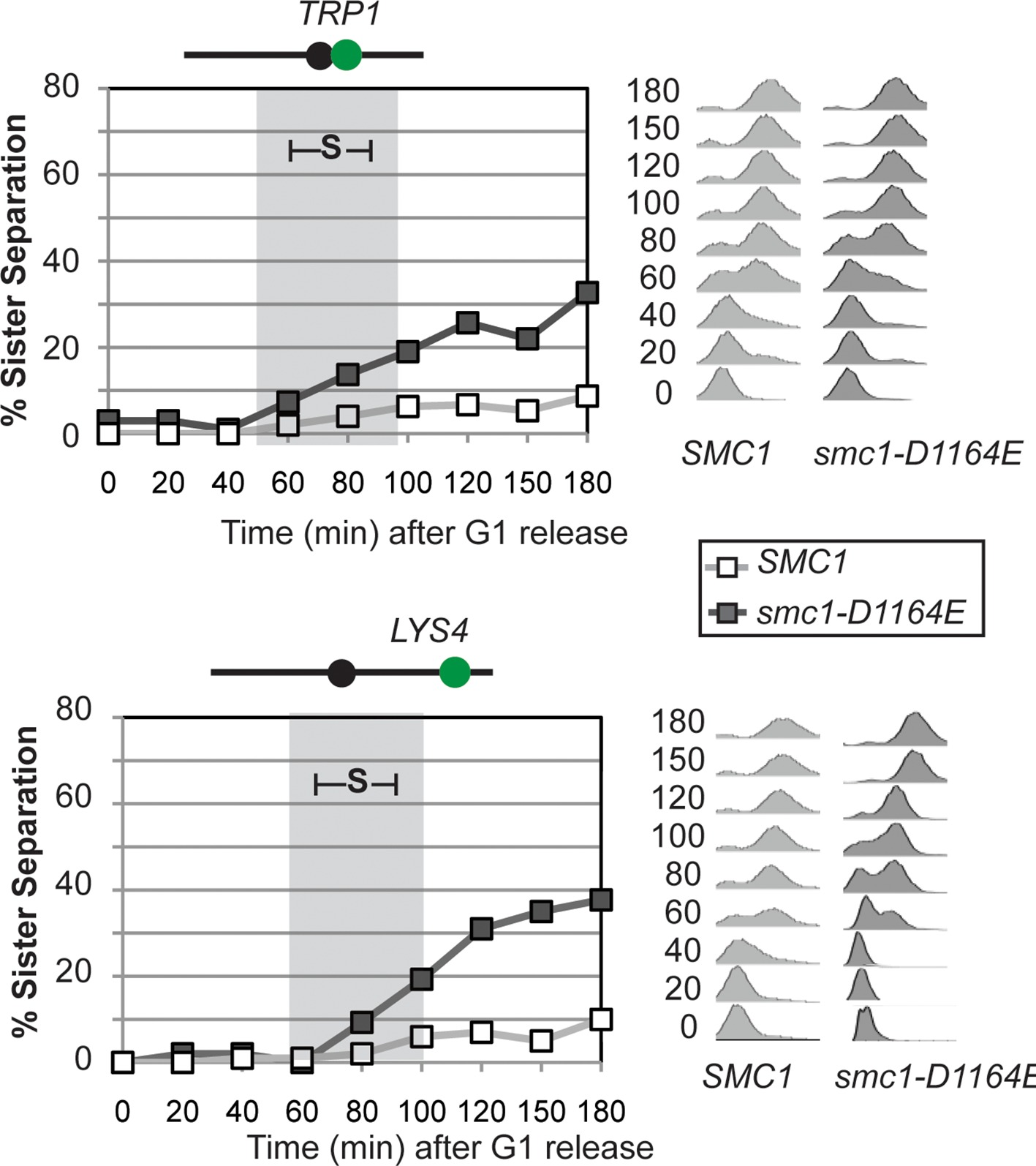 The Atpases Of Cohesin Interface With Regulators To Modulate Cohesin Mediated Dna Tethering