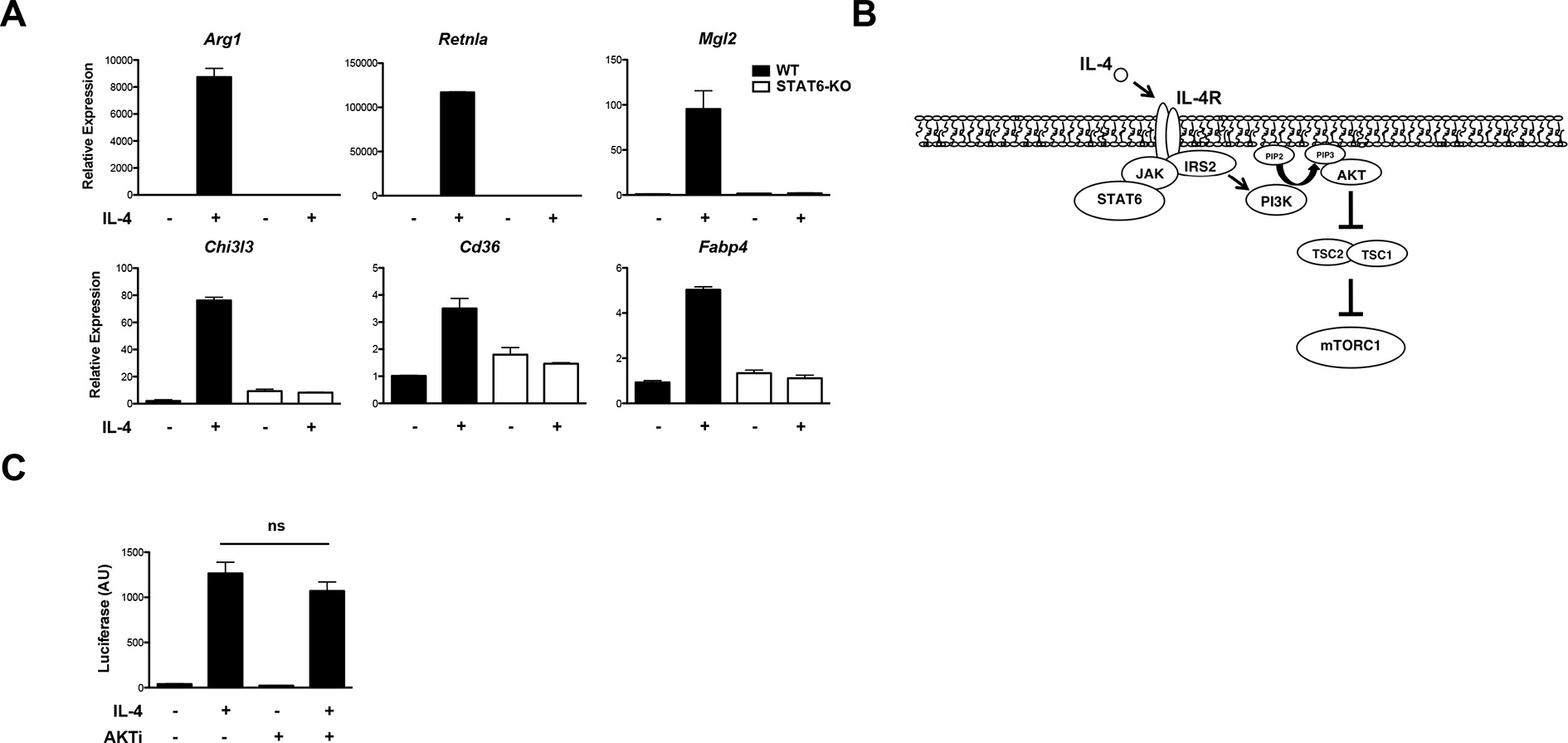 Akt Mtorc1 Signaling Regulates Acly To Integrate Metabolic