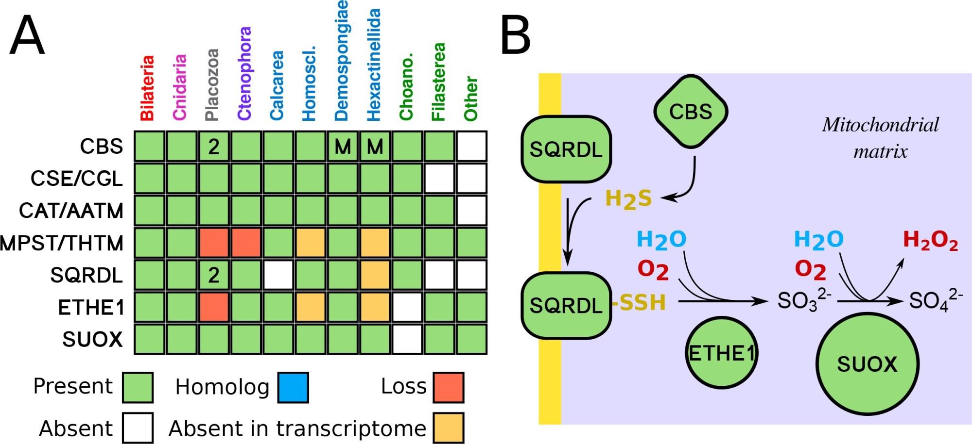 hight resolution of sulfide metabolism pathway