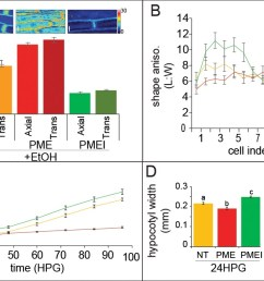 ectopic alteration of pectin biochemistry alters cell anisotropy and hypocotyl elongation  [ 1134 x 697 Pixel ]