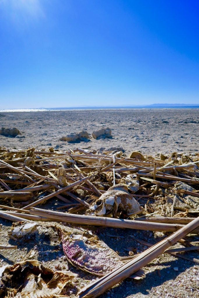 Salton sea beach
