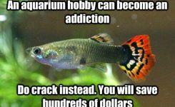 An Aquarium Hobby Can Become An Addiction Do Instead You