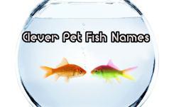 Top  Clever Pet Fish Names