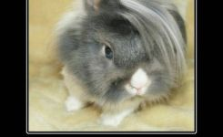 Funny Bunnies Emo Bunny Rabbit Animalody Understands Him Funny Pics Pictures Pic