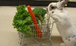 Funny Pictures Bunny Rabbit