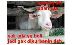 Meme Lucu Idul Adha Terbaru Qurban Kurban Super Ngakak Image