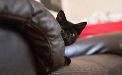 Best Remote Control Cat Toys