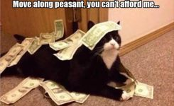 funny-cat-with-words-money