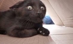 Funny Black Cat Scared Face Big Eyes