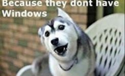 Funny Dog Memes Apple Store No Windows