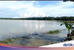 Curah Hujan Tinggi, Puluhan Hektare Sawah di MatengMamujuTerendam Banjir