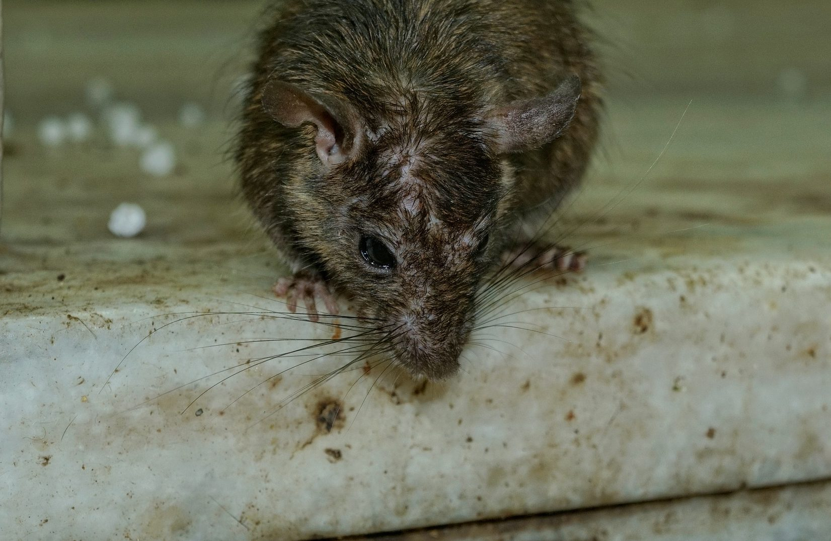 What is hantavirus and are there any cases in the UK ...