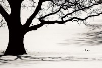 Wall Glass Art - Tree - Black and White | Buy at ...