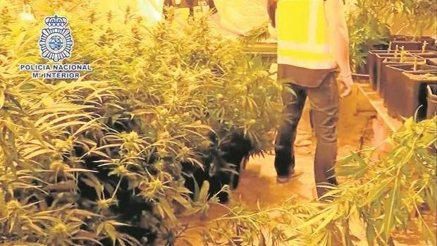 Drug Trafficking Network Dismantled in Spain