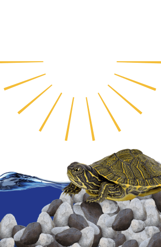 do turtles need uvb light a guide to