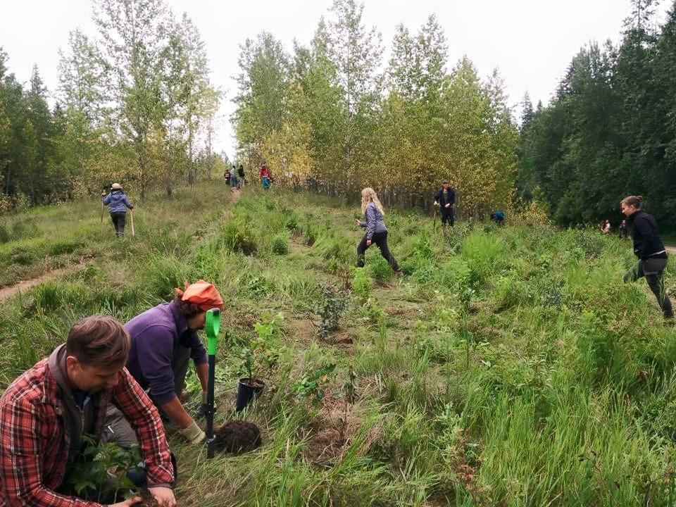 Edmonton Food Forest 2015