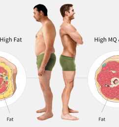 body fat and muscle quality checkup [ 1323 x 859 Pixel ]